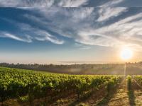 vindebourgogne-manuel-olivier.com