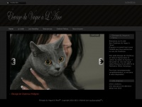 elevage-chartreux.ch