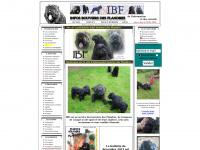 infos-bouviers-des-flandres.com