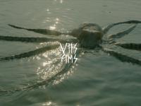 voyellesfilms.com