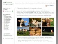 1000vaches.fr
