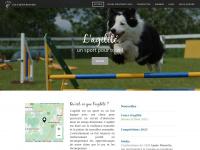 club-agilite-monteregie.ca