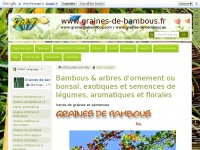 graines-de-bambous.fr