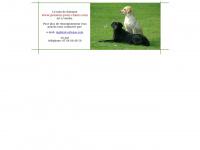 residence.canine.free.fr