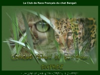 Cercle-felin-du-bengal.com