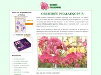 orchidee-phalaenopsis.eu