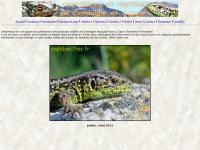 amphibien.free.fr