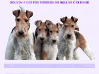fox-terriers.fr