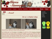 mainecoonsauvages.fr