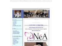 chienbeagle.free.fr