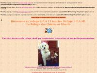 Refugestam.free.fr - Adoption Chien et Chiot au Refuge STAM - SPA