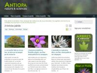 antiopa.info