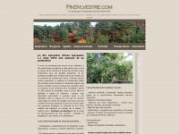 pinsylvestre.com