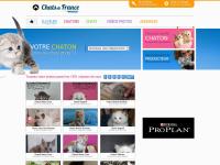 chats-de-france.com