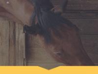 webdesignsante.com