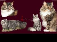 Chatterie-des-suquets.be