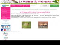 mineuse-marronnier.com