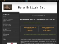chats-british-shorthair.com
