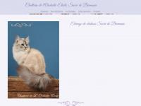 Chatteriedelorchideeetoile.fr