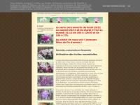 amazone-orchidees.blogspot.com