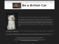 chats-british-shorthair.net