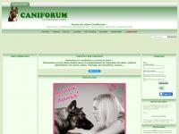 forum-chien.com